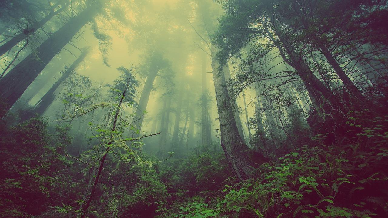 Waldversicherung
